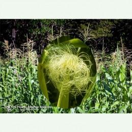 Corn élixir floral californien FES
