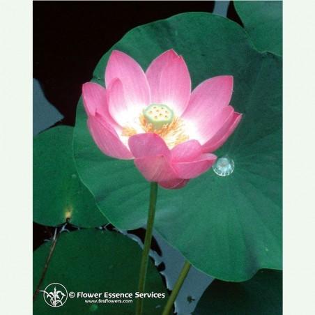 Lotus élixir floral californien FES