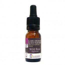 Elixir fleurs de bach 37 Wild Rose (Eglantier)
